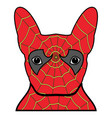 superhero symbol as a french bulldog character vector image