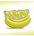 bananas branch vector image