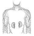 man torso kidney organ inside medicine health vector image vector image