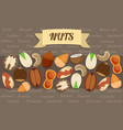 flat nuts elements collection vector image vector image