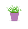 Grass Growing in fviolet lower pot icon Isolated vector image