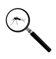 Mosquito and magnifier vector image vector image