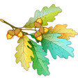Oak tree branch with acorns vector image vector image