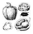 Pepper hand drawn set Vegetable engraved vector image vector image