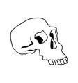 skull human structure anatomy bone icon vector image