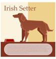 irish setter colourful postcard vector image