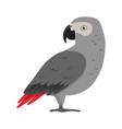 african grey parrot silhouette icon in flat style vector image vector image