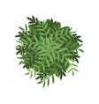 green bush landscape design element top view vector image vector image