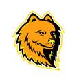 pomeranian dog mascot vector image