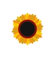 Sunflower flat icon vector image
