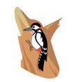 Woodpeacker vector image vector image