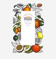 citrus fruits design template hand drawn colour vector image vector image