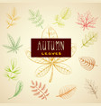 collection colorful autumn leaves vector image