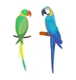 Cartoon parrot bird vector image vector image