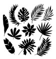 tropical leaf silhouette elements set isolated on vector image