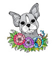 doodle a face of a cute bulldog in the colors vector image vector image