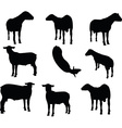 sheep silhouette with looking pose vector image vector image