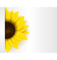 sunflower banner vector image