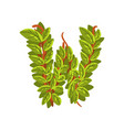 letter w english alphabet made of tree branches vector image