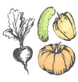 colorful graphic vegetables with colorless beet vector image vector image