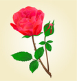 Twig Red rose stem with leaves and bud vector image vector image