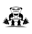 sport icon panda bear with barbell vector image