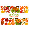 autumn banner with border of fall leaf pumpkin vector image vector image