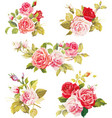 beautiful isolated flowers on white background vector image