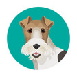 fox terrier in color circle colorful vector image