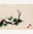sakura cherry tree in blossom and green pine tree vector image vector image