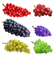 set of grapes vector image vector image