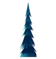spruce pine or fir tree evergreen plant isolated vector image