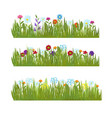 summer grass with wild beautiful flowers vector image vector image