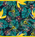 tropical pattern with dragonfly vector image
