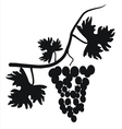 Black silhouette of grapes on the vine vector image vector image