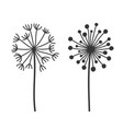 dandelion fluffy flowers set on white background vector image
