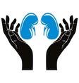 Hands with human kidneys symbol vector image
