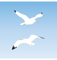 Seagull in the sky vector image vector image
