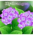 Beautiful spring flowers Hydrangea Cards or your vector image vector image
