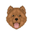 chow-chow pixel art portrait cartoon dog icon vector image vector image