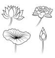 floral water lily elements for design vector image vector image