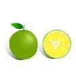 fresh lemon on white background vector image vector image