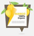 banner mango organic vector image