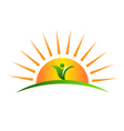 Plant in sunrise logo vector image vector image