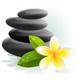 plumeria flower and spa stones vector image