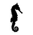 Black seahorse vector image vector image