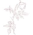 ink rose vector image