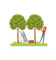 girl harvesting olives olive tree ladder and vector image vector image