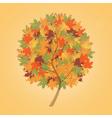 autumn tree maple vector image vector image