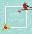 bullfinch winter red feather bird sitting vector image
